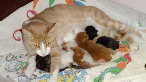 peaches-with-her-kittens
