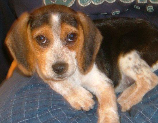 Skittles as an adorable little puppy!